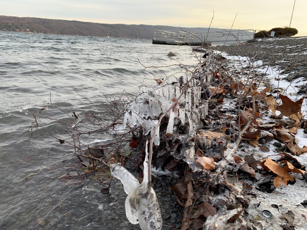 Frozen Leaves and Branches at Canandaigua Lake