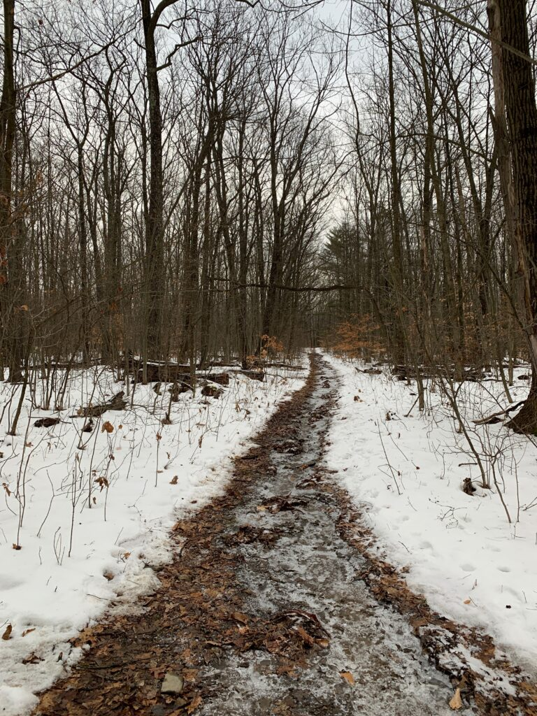 trail at Finger Lakes National Forest